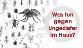 Vorbeugende Maßnahmen zur Schädlingsbekämpfung