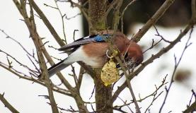 Soll man Vögel und Wildtiere im Winter füttern?