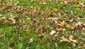 Grünflächenpflege übers Jahr verteilt